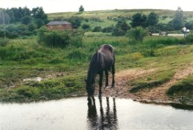 New Forest0001.jpg